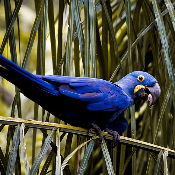 Pantanal 9